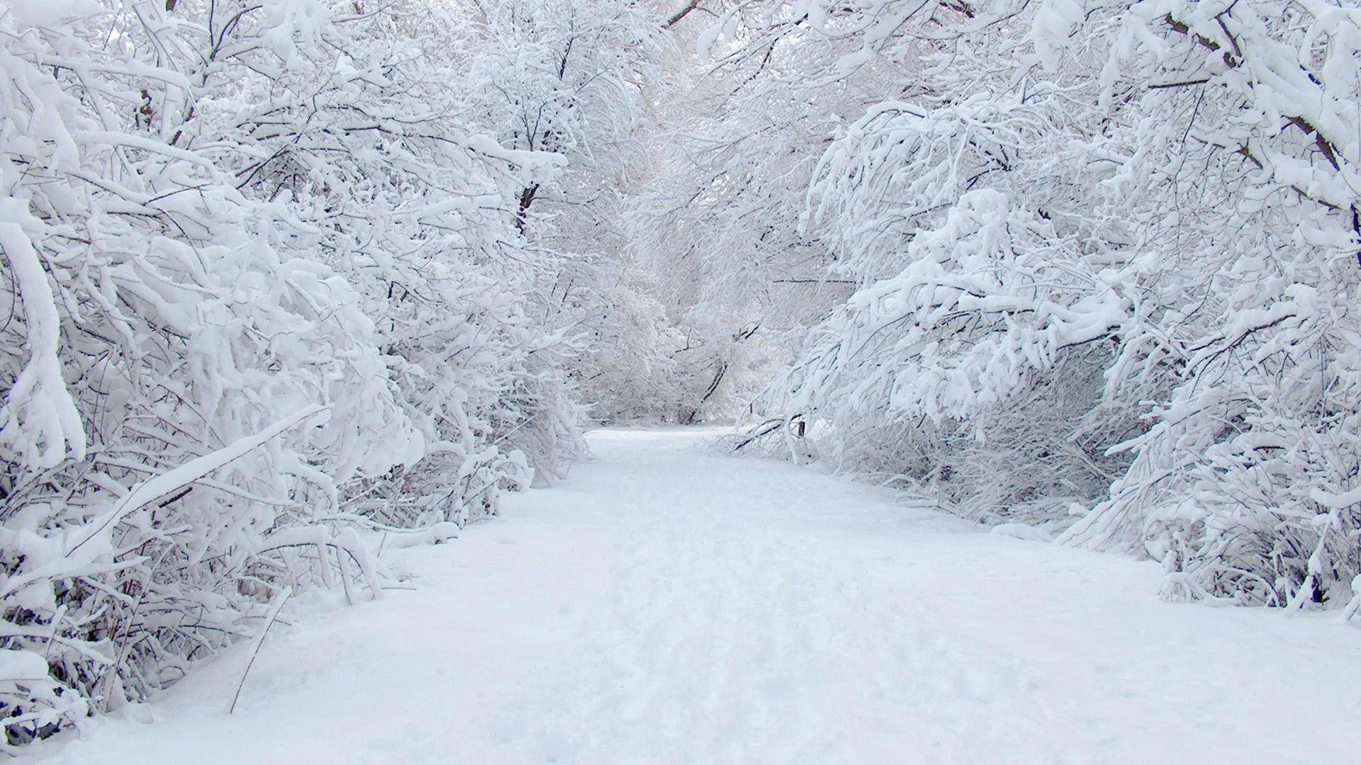Winter Wonderland Backgrounds (41+ images).