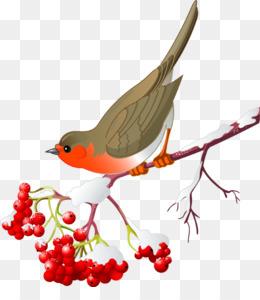 Berries Watercolor PNG.