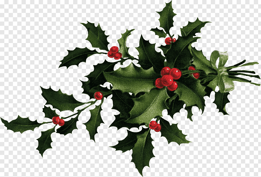 Desktop Common holly Christmas, HOLLY free png.