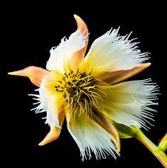 Imagine gratuită pe Pixabay.