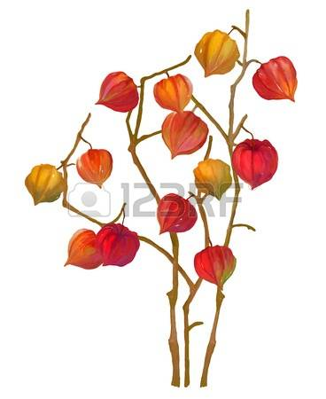 977 Winter Cherry Cliparts, Stock Vector And Royalty Free Winter.