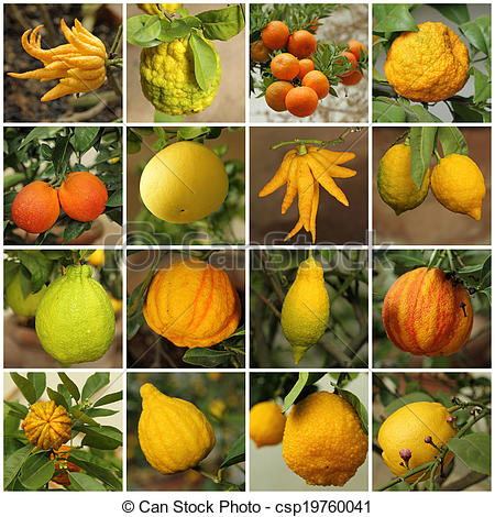 Stock Photo of collage with images of various citrus fruits.