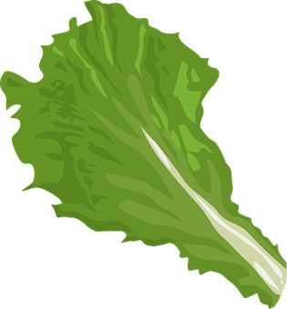Cabbage, Leaf.