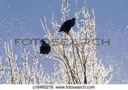 Stock Images of Wintering sharp.