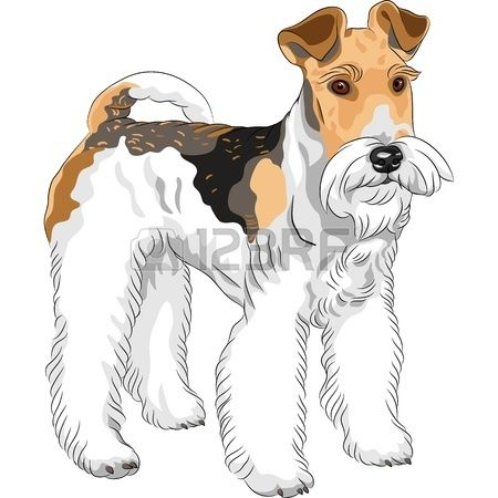 17 Best images about Wire fox terriers on Pinterest.