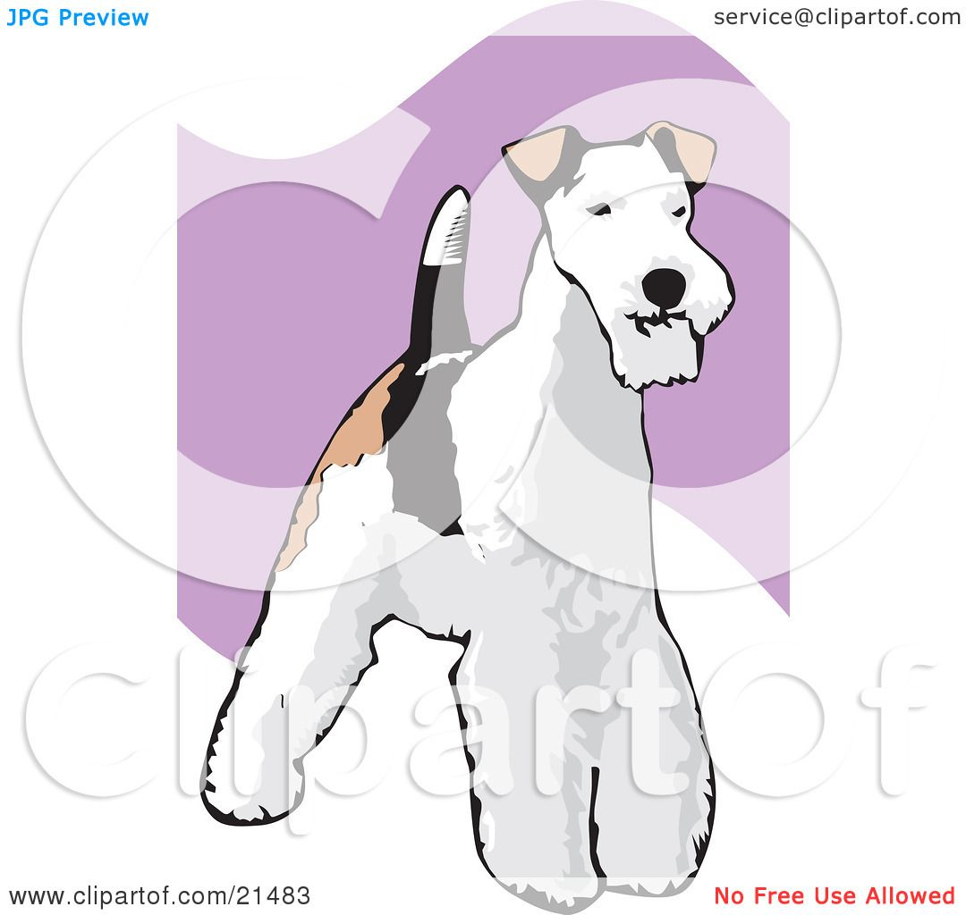 Clipart Illustration of a Standing And Alert Wire Fox Terrier Dog.