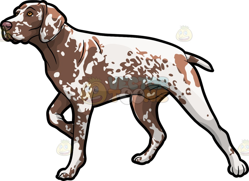 German wirehaired pointer clipart.