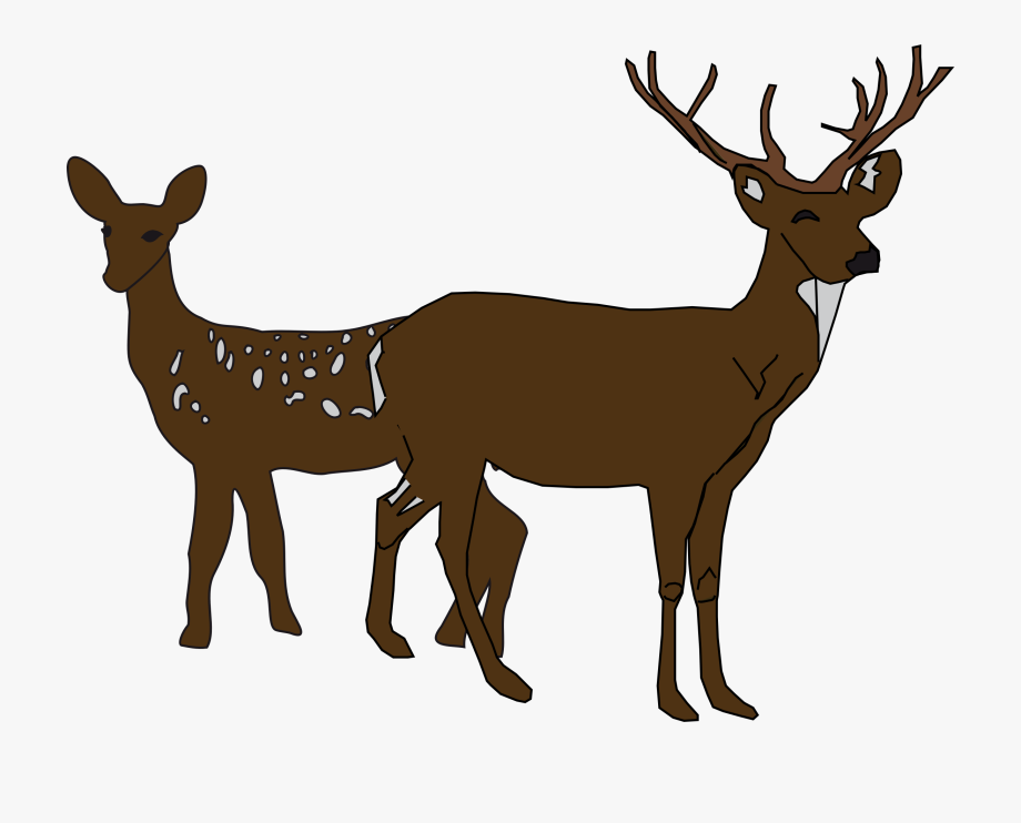 Whitetail Deer Antlers Clipart.