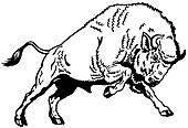 Clip Art of european bison black white k18897336.