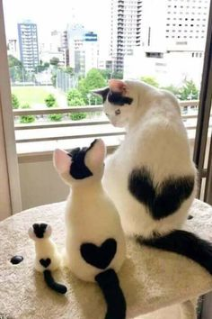 44 Best Cute cats images in 2019.