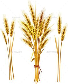 8 Best Wheat tattoo images.