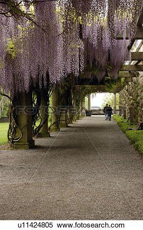Stock Image of Couple Walking Under Wisteria Arbor u11424805.