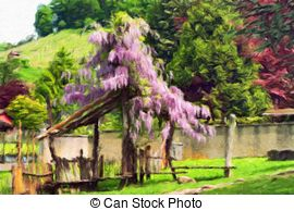 Stock Photography of pergola with wisteria.