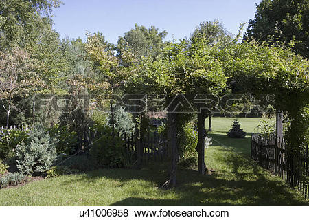 Pictures of GARDEN: arbor covered in Wisteria vine, rustic country.