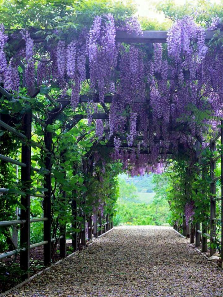 1000+ ideas about Wisteria on Pinterest.
