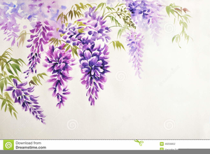 Wisteria Drawing Clipart.