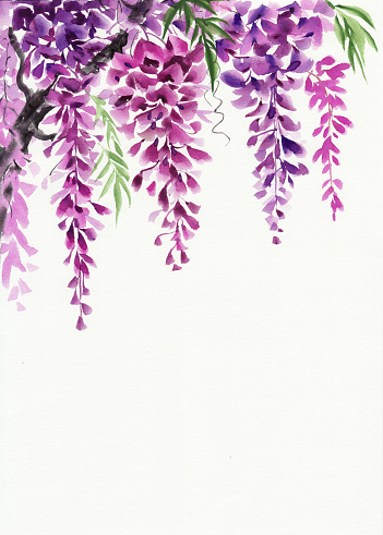 Free Purple Wisteria Cliparts, Download Free Clip Art, Free.