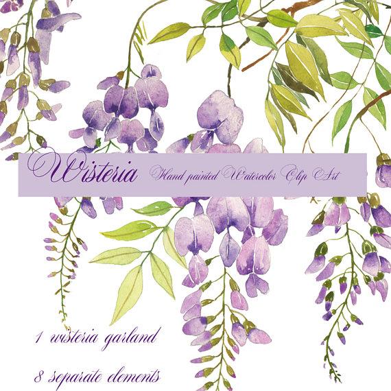 Wisteria watercolor clip art, Floral garland, Printable.