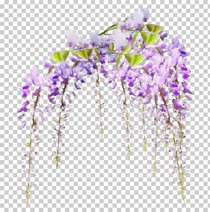 Dos Santos Marie Flower Vine Garden, wisteria flowers.