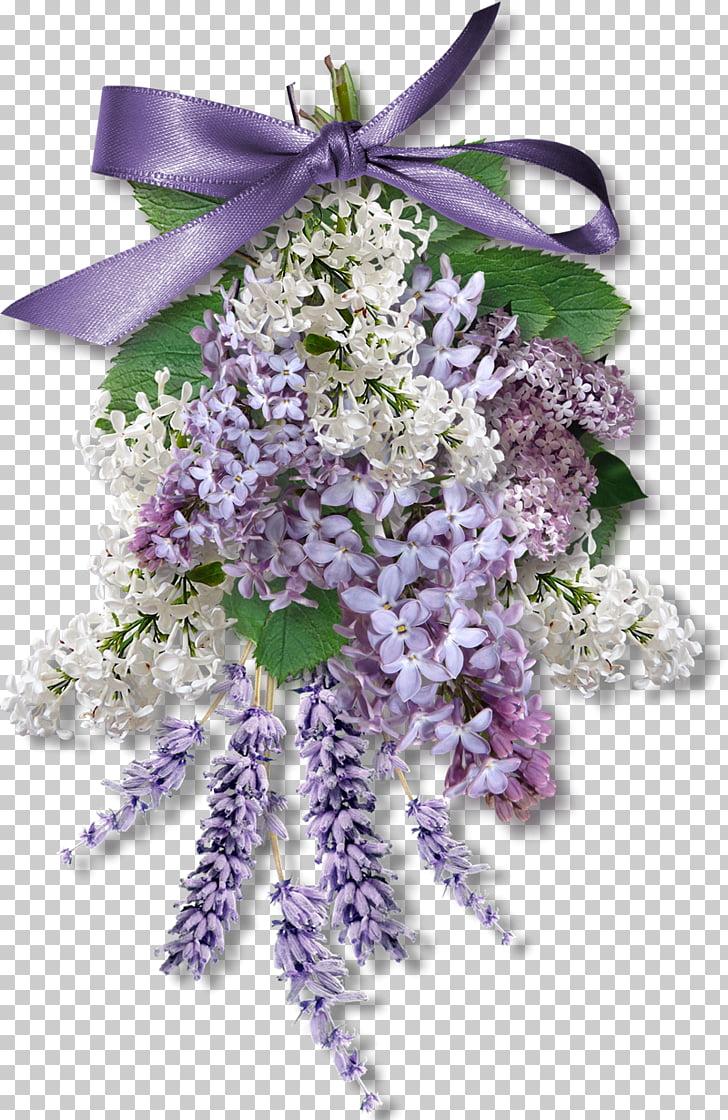 Wisteria sinensis Flower Purple , lilac PNG clipart.