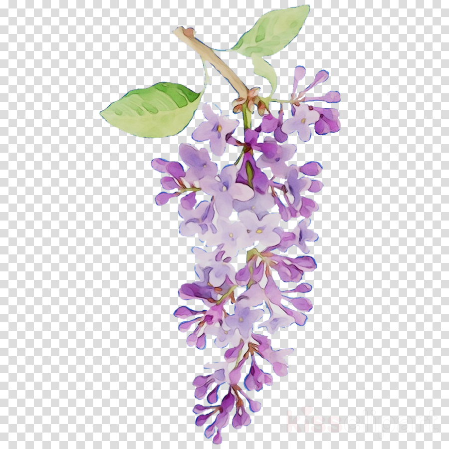 Wisteria Flower clipart.