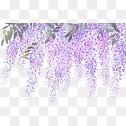 Painted Lavender Wisteria Flowers.