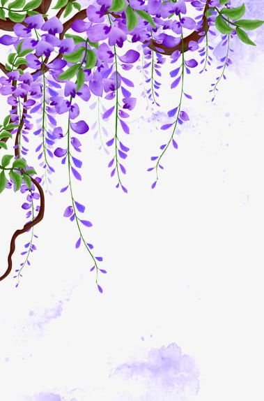 Wisteria Vines PNG, Clipart, Abstract, Background.