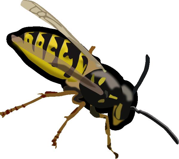 Wasp Clip Art at Clker.com.