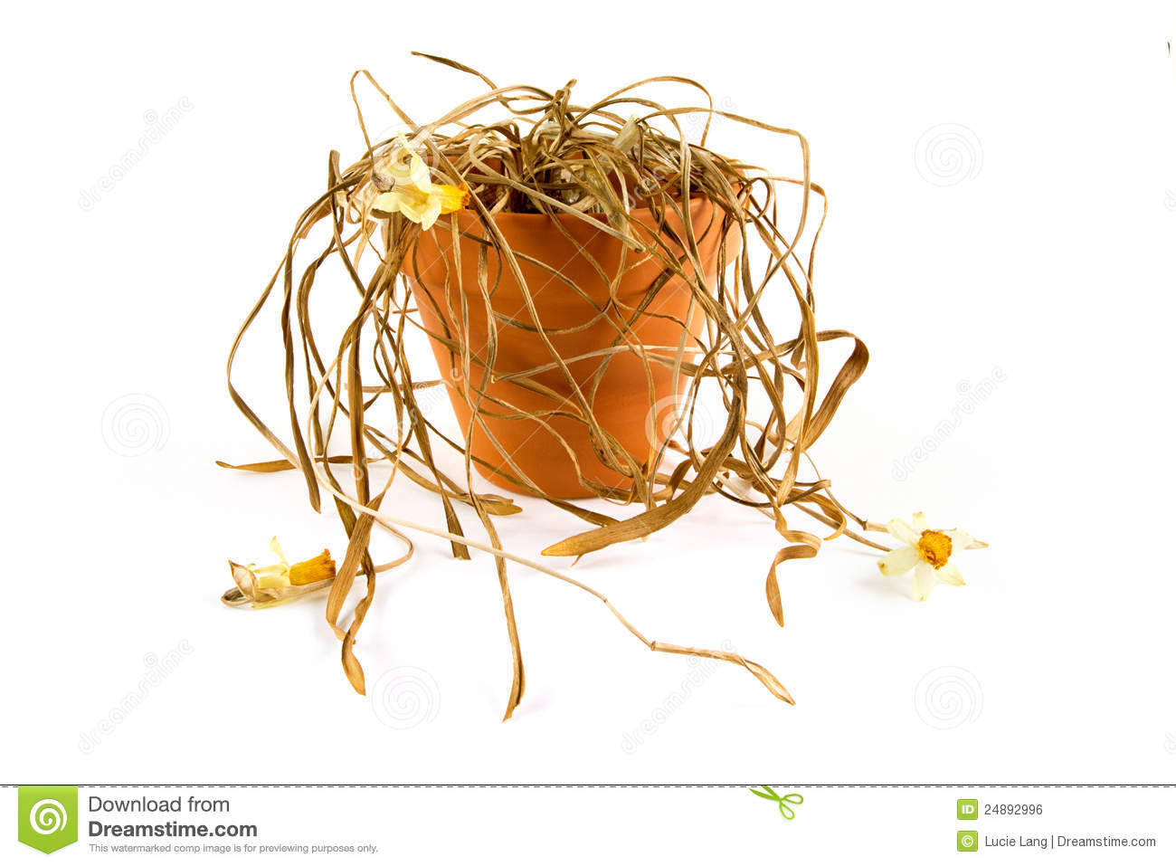 Clipart no roots withered dying plant.