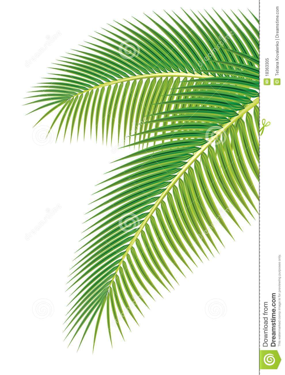 Palm leaves clipart #8