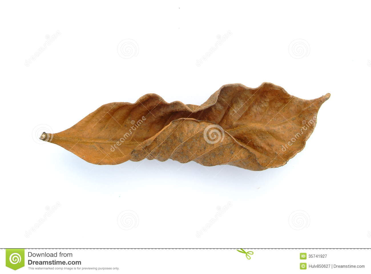 Withered Leaf Stock Photography.