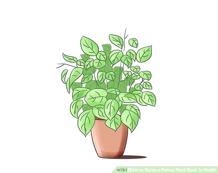 Planting clipart wilted plant, Planting wilted plant.