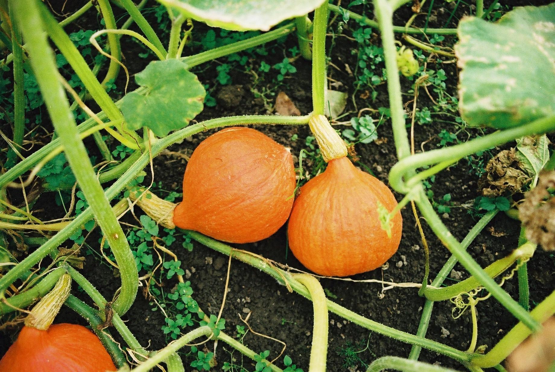 Organic Seeds.