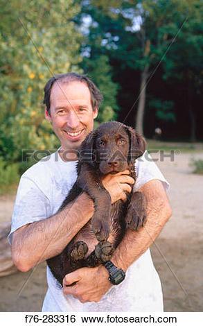 Stock Images of Man holding Chocolate Labrador Retriever puppy.