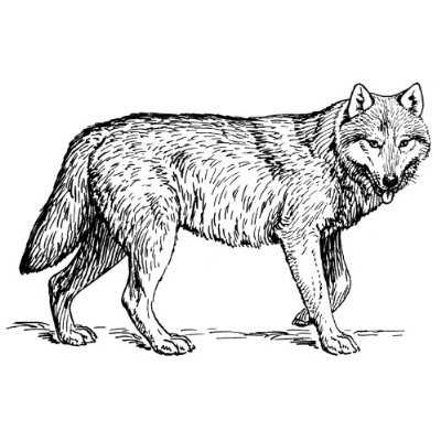 Black And White Clipart Wolf.