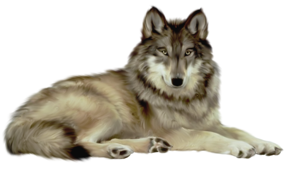 Transparent Wolf Clipart.