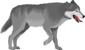 Wolf Stock Illustrations.