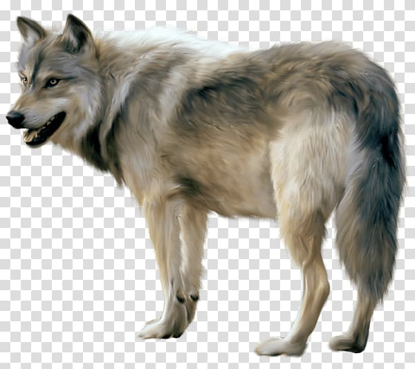 Gray and black wolf, Wolf Sideview transparent background.