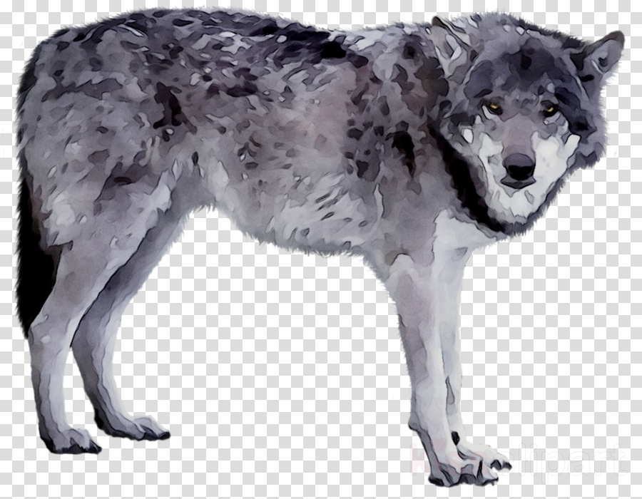Wolf Cartoon clipart.