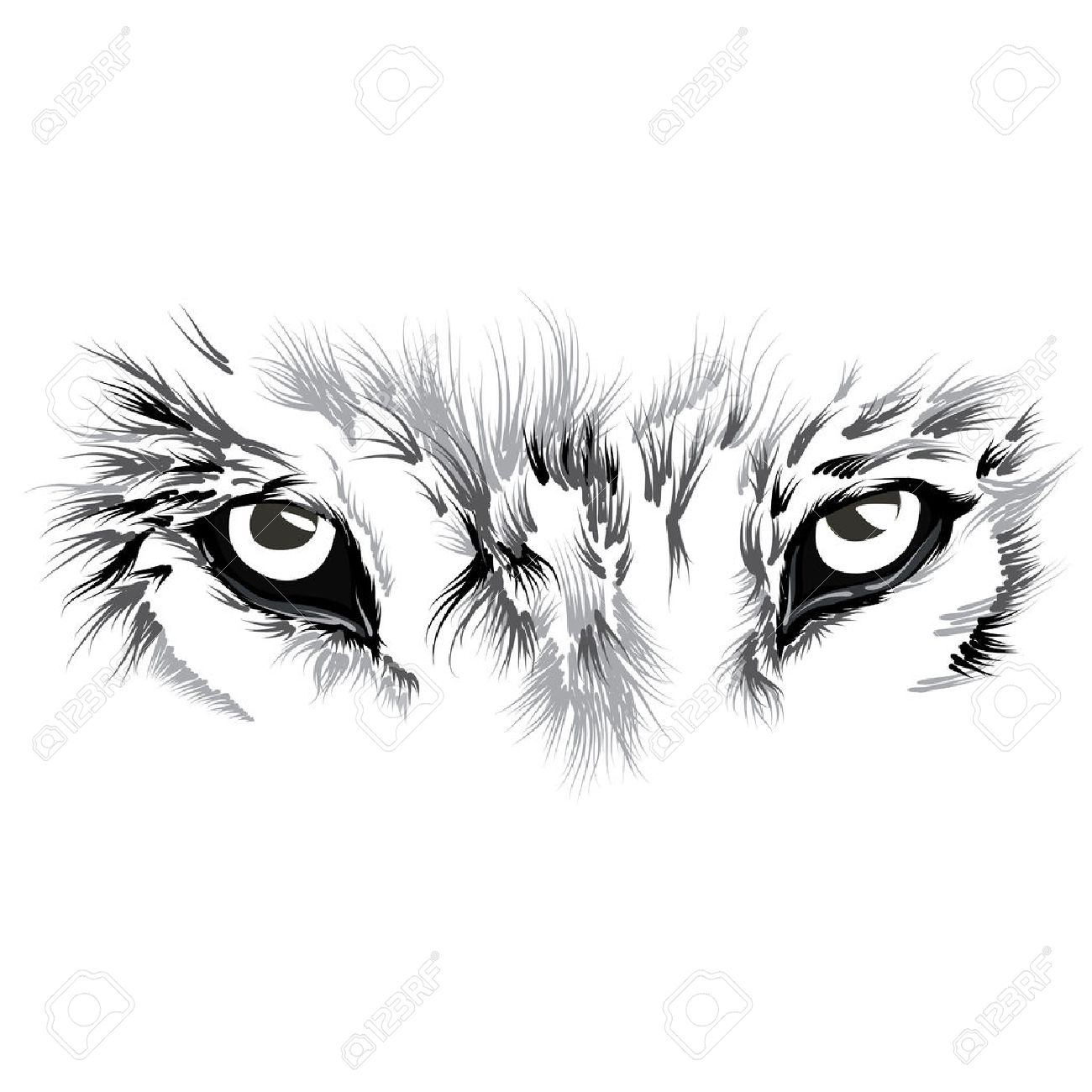 2,058 Wolf Eyes Stock Vector Illustration And Royalty Free Wolf Eyes.