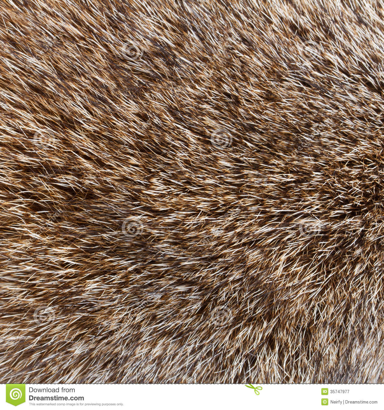 Abstract Wolf Fur Background Royalty Free Stock Photography.