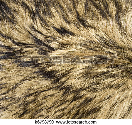 Stock Photography of Wolf Fur Texture k6798790.