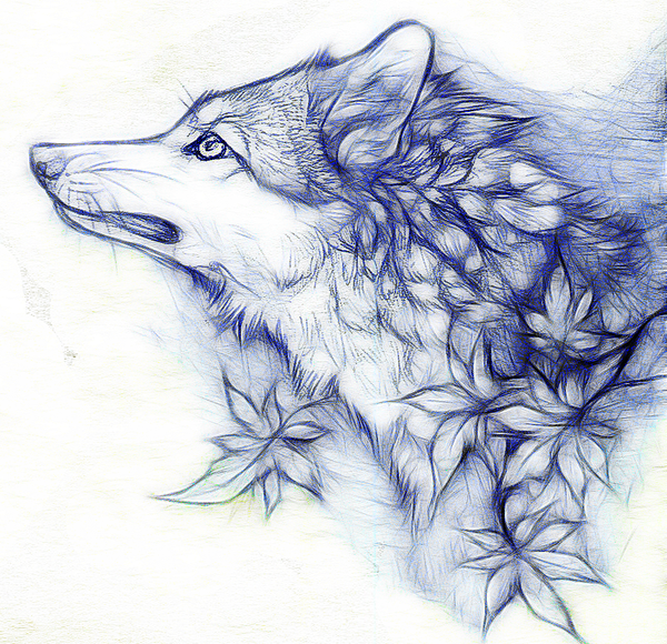 Free Wolf Drawings, Download Free Clip Art, Free Clip Art on.