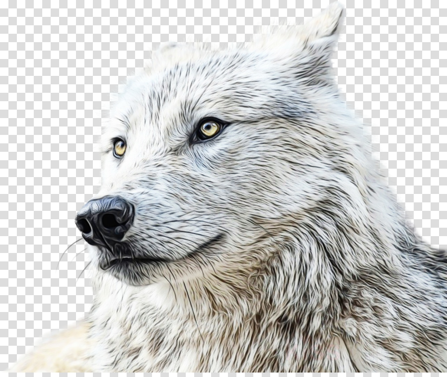 wolf head wildlife drawing wolfdog clipart.