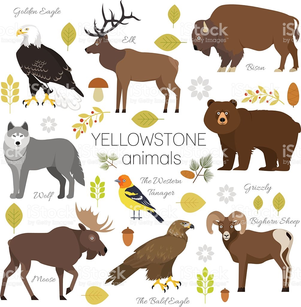 Yellowstone Park Animals Set Moose Elk Bear Wolf Eagle Bison stock.