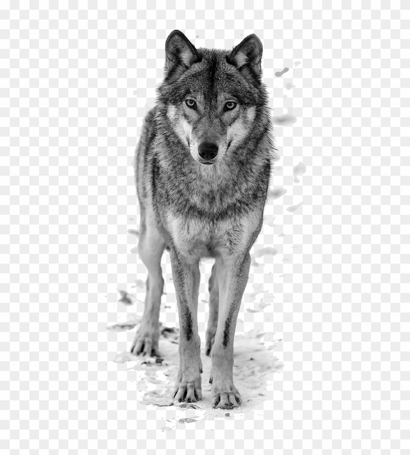 Howling Wolf Clipart Free.