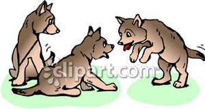 Playful Wolf Cubs.