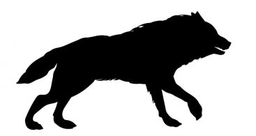 Wolf Running Vector Archives.