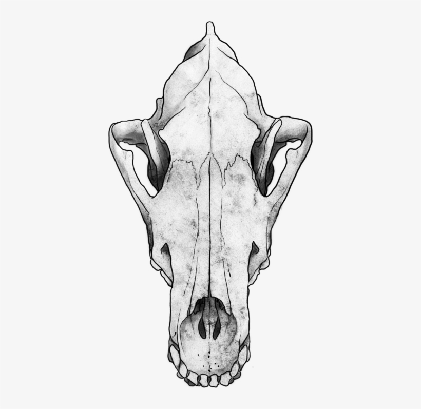 Wolf Skull Png.