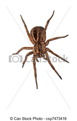 Pictures of A wolf spider ready to pounce..